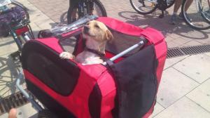 Perro en carrito